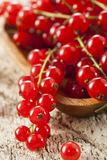 Organic Raw Red Currants Stock Photography