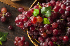 Organic Raw Red Grapes Royalty Free Stock Photo