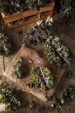 Organic Raw Red Kale Royalty Free Stock Photo