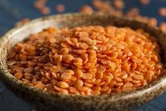 Organic Raw Red Lentils Stock Image