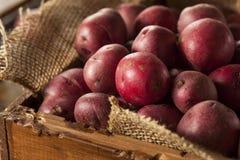 Organic Raw Red Potatoes Royalty Free Stock Photos