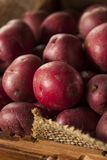 Organic Raw Red Potatoes Stock Image