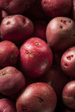 Organic Raw Red Potatoes Royalty Free Stock Images