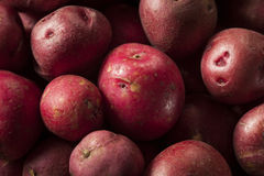 Organic Raw Red Potatoes Royalty Free Stock Photography