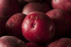 Organic Raw Red Potatoes Royalty Free Stock Image