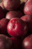 Organic Raw Red Potatoes Royalty Free Stock Image