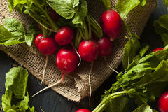 Organic Raw Red Radishes Royalty Free Stock Image
