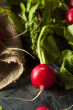 Organic Raw Red Radishes Stock Photos