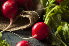 Organic Raw Red Radishes Royalty Free Stock Images