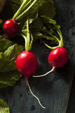 Organic Raw Red Radishes Stock Image