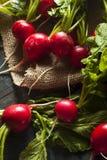 Organic Raw Red Radishes Stock Photo