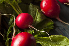 Organic Raw Red Radishes Royalty Free Stock Photos