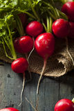 Organic Raw Red Radishes Royalty Free Stock Photography