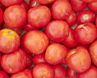 Organic raw tomatoes Royalty Free Stock Image