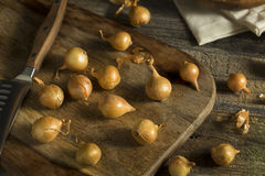 Organic Raw Yellow Pearl Onions Stock Images