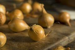 Organic Raw Yellow Pearl Onions Royalty Free Stock Photo