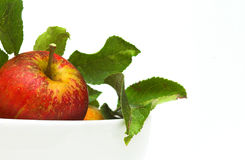 Organic Red Apple Royalty Free Stock Image