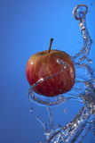 Organic red apple water splash blue background Stock Images