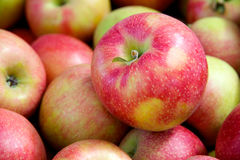 Organic red apples Royalty Free Stock Photo