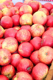 Organic Red Apples. Closeup of bushel of organic red apples royalty free stock photo