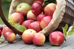 Organic red apples in a basket on the old table Royalty Free Stock Photo