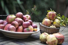 Organic Red apples Stock Images