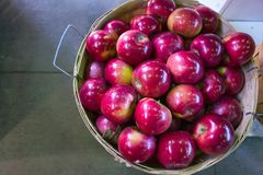 Organic red  apples Stock Photo