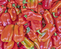 Organic red bell peppers Stock Images