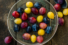 Organic red, blue and yellow plums in the sieve on the wooden table Royalty Free Stock Photography