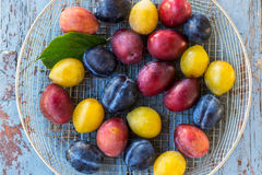 Organic red, blue and yellow plums in the sieve on the wooden table Royalty Free Stock Images