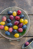 Organic red, blue and yellow plums in the sieve on the wooden table Stock Image