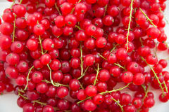 Organic Red Currant Berries Royalty Free Stock Images