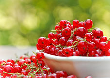 Organic red currant in bowl Royalty Free Stock Images