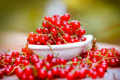 Organic red currant close-up Royalty Free Stock Photo