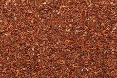 Organic Red Mahogany (eucalyptus pellita) seeds. Stock Photos