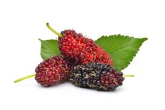 Organic Red Mulberry fruits. Pile of organic Mulberry fruits with green leaves isolated on white background stock images
