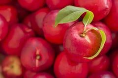 Organic Red Nectarine Stock Photography