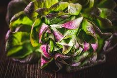 Organic Red Oakleaf lettuce Stock Photo