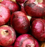 Organic Red Onions Stock Photos