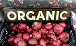 Organic Red Onions. Basket full of organic red onions at outdoor grower's market Royalty Free Stock Photos