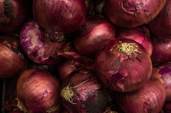 Organic Red Onions Royalty Free Stock Images