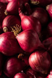 Organic Red Pearl Onions Stock Photo