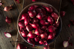 Organic Red Pearl Onions Stock Images