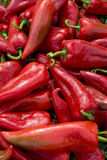 Organic red peppers on grass Stock Photos