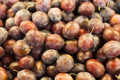 Organic red  plums stock photography