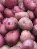 Organic Red Potatoes Stock Photos