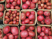 Organic red potatoos at farmers market. Royalty Free Stock Images