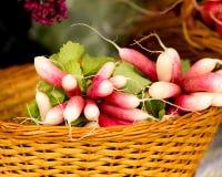Organic Red Radish Stock Photo