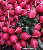 Organic Red Radishes Stock Image
