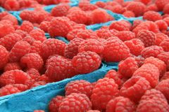 Organic Red Raspberries at the Farmers Market. These are Organic Red Raspberries at the Farmers Market in boxes Royalty Free Stock Photo